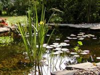 Cleaning Garden Ponds