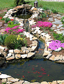 Converting Water Pond to Fish Pond Cottage Style Gardens