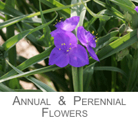 Known Flowers Annuals and Perennials