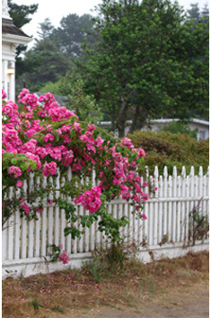 Cottage Garden Fences