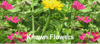 Known Flowers - Annuals and Perennials