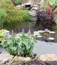 Tropical Garden Pond Picture