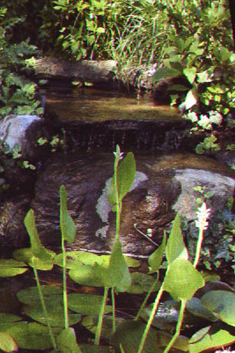 Pond Waterfall Photo